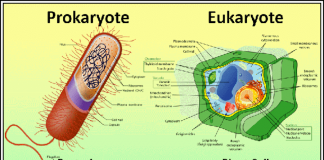 Prokaryote - Nation of Turks