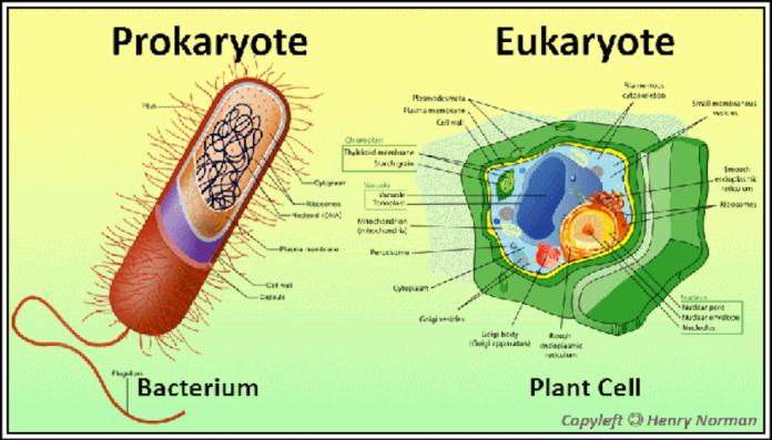Prokaryote - Nation of Turks